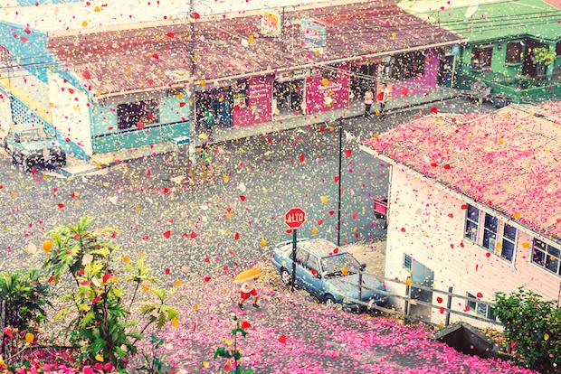 petale de flori pe strada