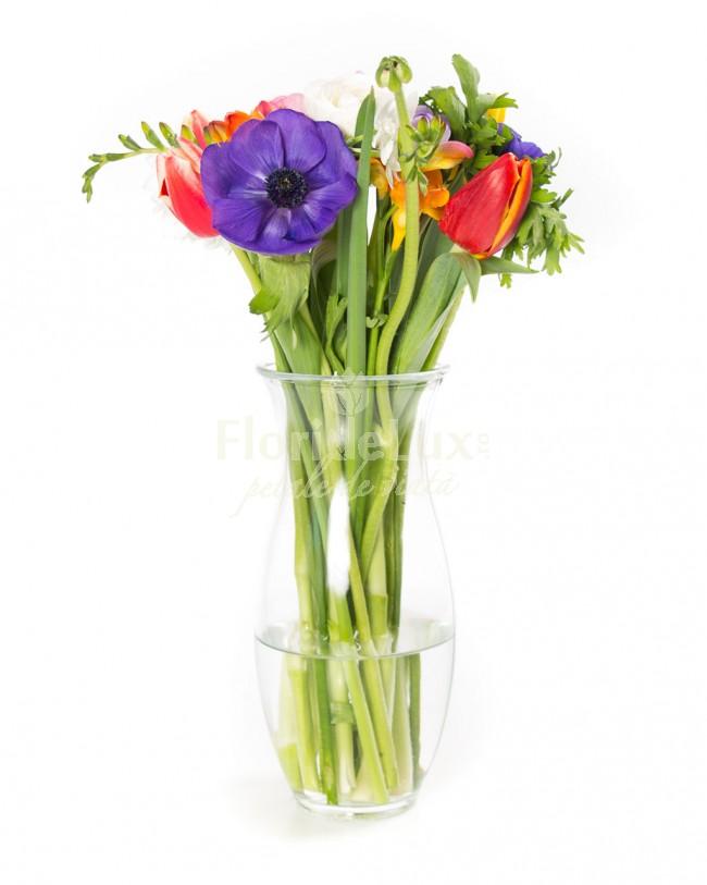 buchet cu anemone, cele mai frumoase flori de primavara