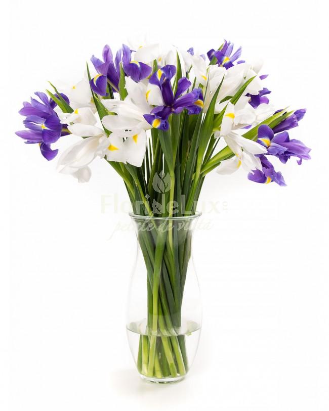 buchet de irisi, cele mai frumoase flori de primavara