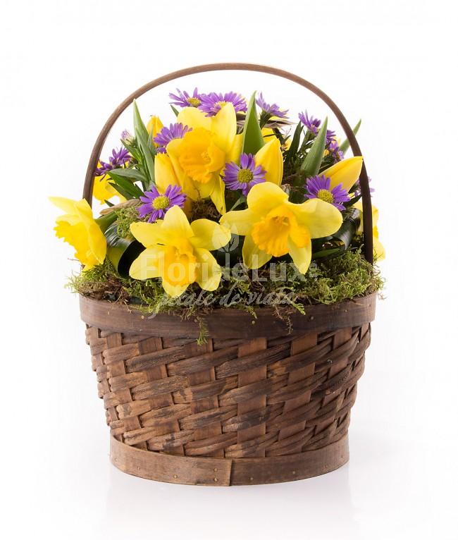 cos cu narcise, cele mai frumoase flori de primavara