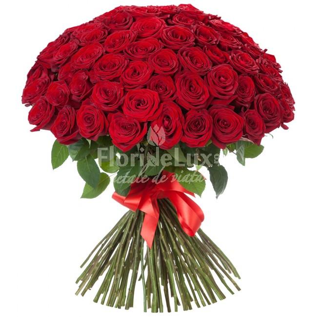 101 trandafiri no.10