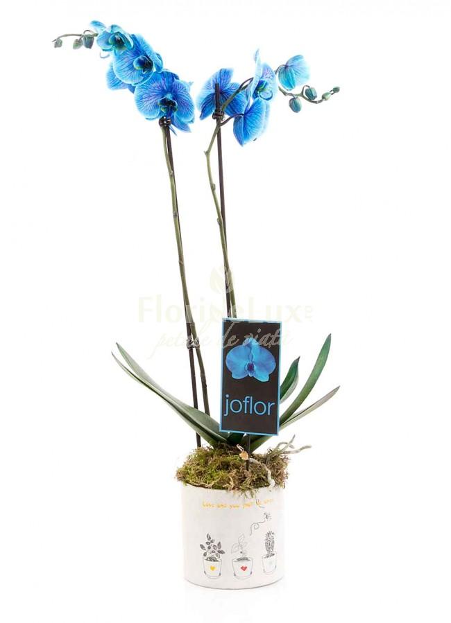 Top 10 cele mai frumoase flori de Sfantul Ilie - locul 9