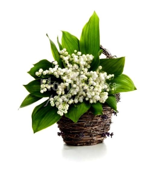 cos_cu_lacramioare, flori online