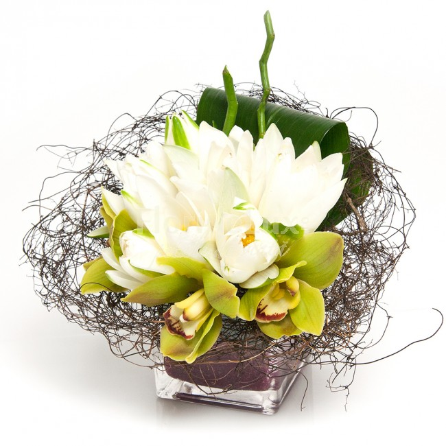 flori online, nuferi