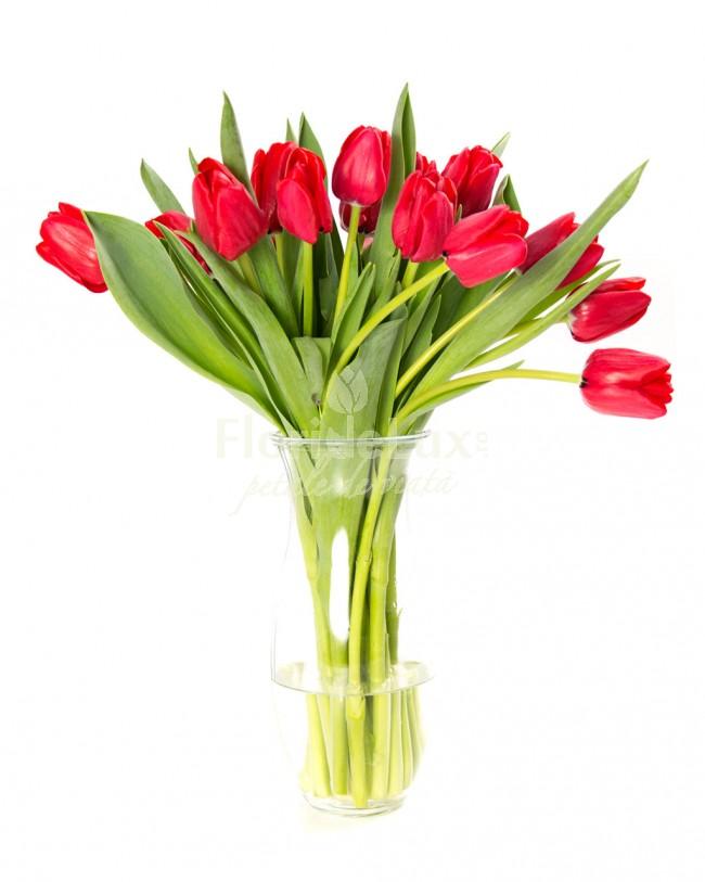 cele mai frumoase lalele rosii
