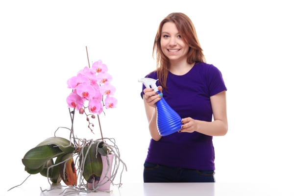 orhidee phalaenopsis, cum avem grija de orhidee