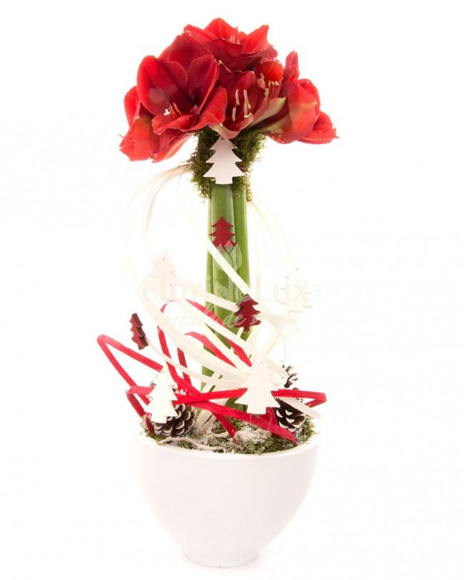 Aranjament Craciun  Eleganta de Craciun cu Amaryllis  https://www.floridelux.ro/eleganta-de-craciun-cu-amaryllis.html