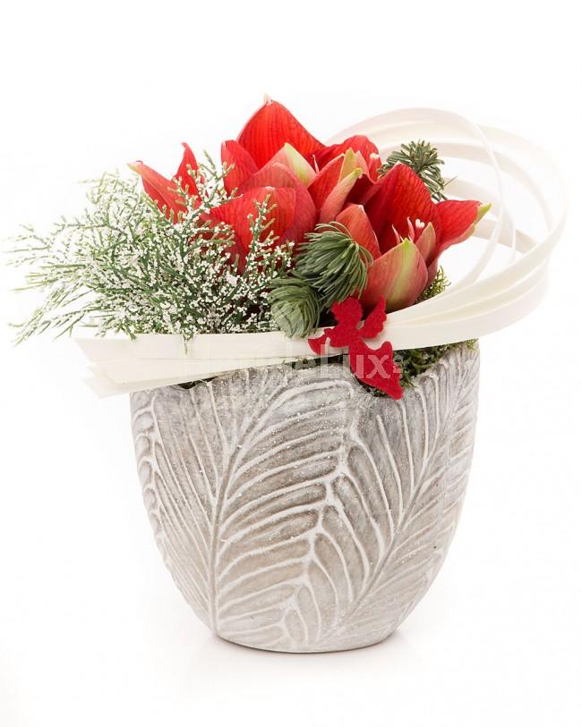 Aranjament Craciun  Amaryllis in vas frunza  https://www.floridelux.ro/amaryllis-in-vas-frunza.html