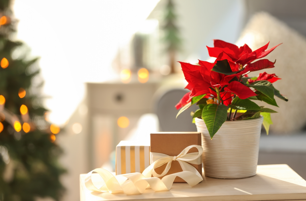 Top 5 Crăciunițe cadou