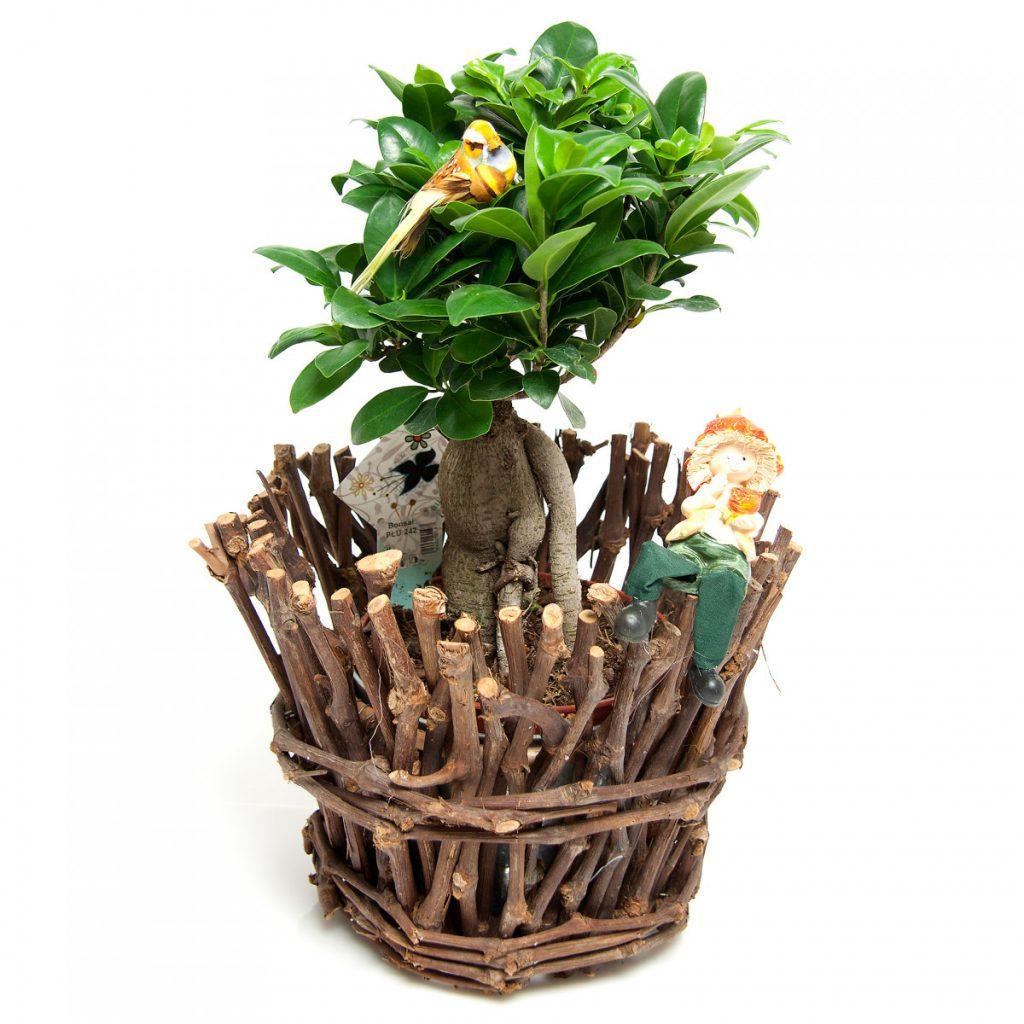 Cel mai bun ghid de cadouri pentru V-Day pentru bărbați, Bonsai distractiv, doar 378,99 RON!