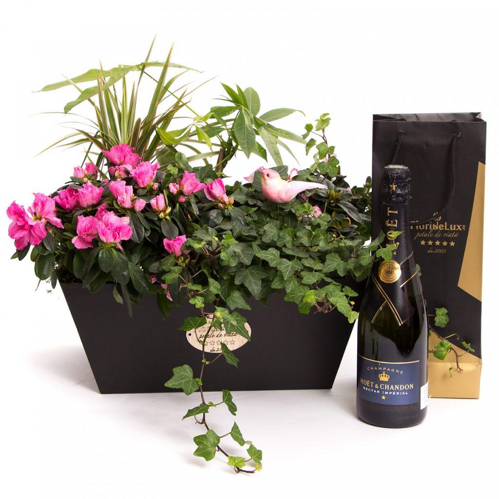 Cel mai bun ghid de cadouri pentru V-Day pentru bărbați, Plante flori la ghiveci și șampanie de lux, doar 749,99 RON!