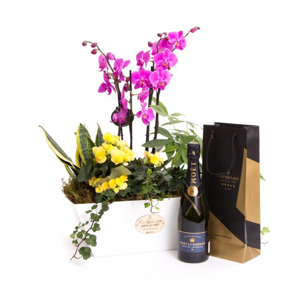 Cel mai bun ghid de cadouri pentru V-Day pentru bărbați, Flori la ghiveci colorate și șampanie de lux, doar 799,99 RON!