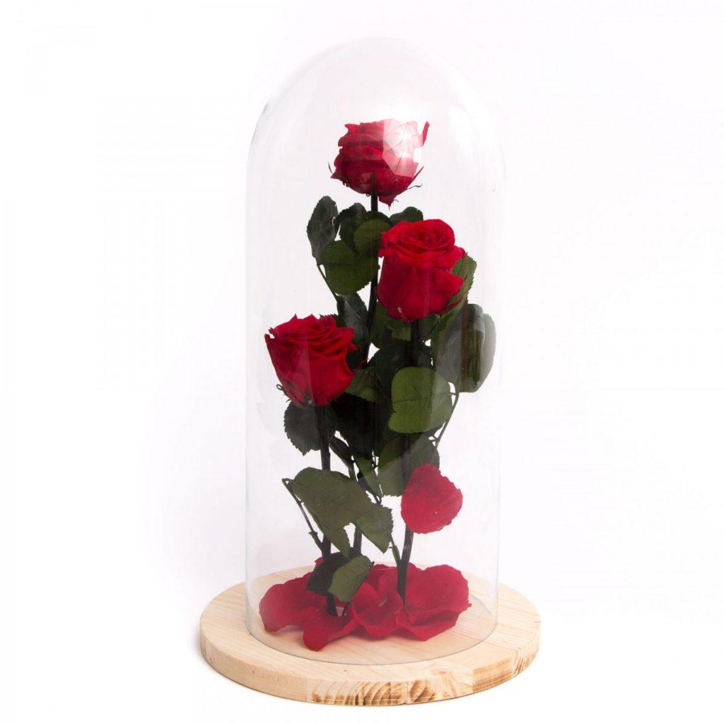 Cupola 3 trandafiri criogenati, doar 429 RON!